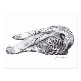Tigre - pluma y tinta postales