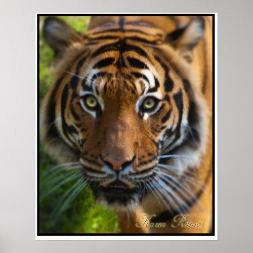 Tigre Póster