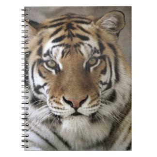 tigre prisionero, santuario del parque zoológico d libreta
