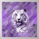 Tigre púrpura posters
