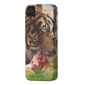 Tigre que come su foto real de la carne Case-Mate iPhone 4 carcasas