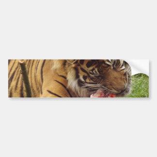 Tigre que come su foto real de la carne pegatina para auto