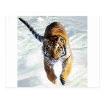 Tigre que corre en nieve postal