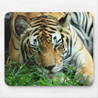 Tigre que duerme en la hierba Mousepad