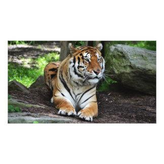 Tigre que espera, fotografía del tigre, animal fotografías
