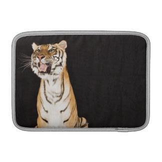 Tigre que ruge fundas para macbook air