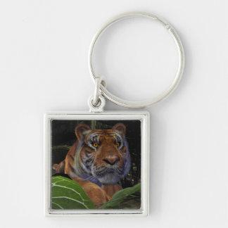 Tigre que se agacha llavero cuadrado plateado