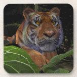 Tigre que se agacha posavasos