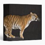 Tigre que se coloca en la plataforma