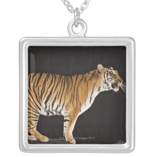 Tigre que se coloca en la plataforma grimpolas