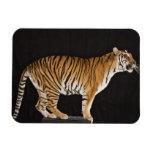 Tigre que se coloca en la plataforma iman rectangular