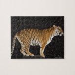 Tigre que se coloca en la plataforma puzzles