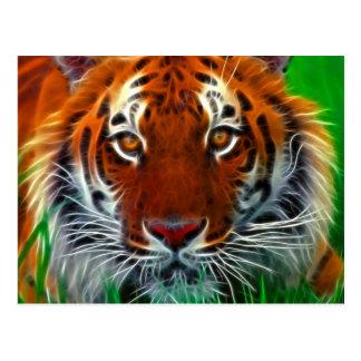Tigre raro de Sumatran de Indonesia Postales