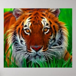 Tigre raro de Sumatran de Indonesia Póster