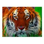 Tigre raro de Sumatran de Indonesia Tarjeta Postal