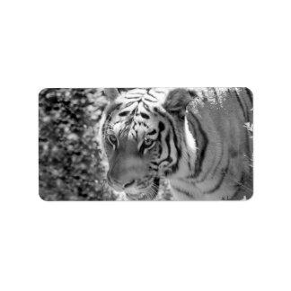 Tigre rayado salvaje blanco y negro etiquetas de dirección