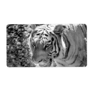 Tigre rayado salvaje blanco y negro etiquetas de envío