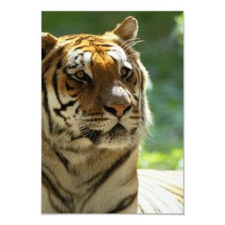 Tigre relajado invitación 8,9 x 12,7 cm