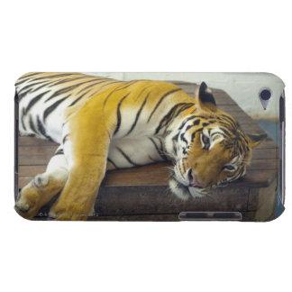 Tigre, Samui, Tailandia iPod Case-Mate Protectores