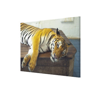 Tigre, Samui, Tailandia Impresiones En Lienzo Estiradas