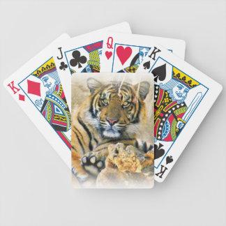 Tigre, Seeking_ Barajas De Cartas