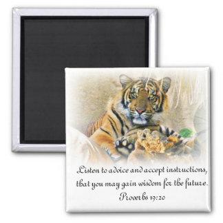 Tigre, Seeking_ Imán Cuadrado