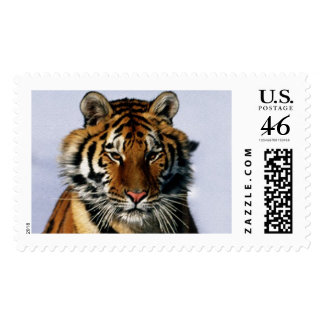 tigre sellos