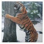 Tigre siberiano (altaica del Tigris del Panthera) Azulejo Cuadrado Grande