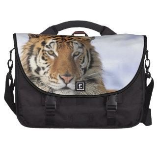 Tigre siberiano, altaica del Tigris del Panthera,  Bolsas Para Portatil