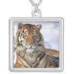Tigre siberiano, altaica del Tigris del Panthera, Colgante Cuadrado