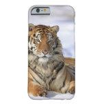Tigre siberiano, altaica del Tigris del Panthera, Funda De iPhone 6 Barely There