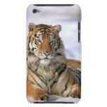 Tigre siberiano, altaica del Tigris del Panthera,  Case-Mate iPod Touch Coberturas