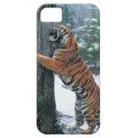 Tigre siberiano (altaica del Tigris del Panthera) iPhone 5 Funda
