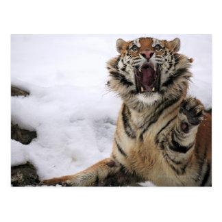 Tigre siberiano (altaica del Tigris del Panthera) Tarjetas Postales