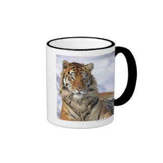 Tigre siberiano, altaica del Tigris del Panthera, Taza De Dos Colores