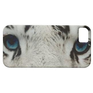 Tigre siberiano blanco iPhone 5 carcasa