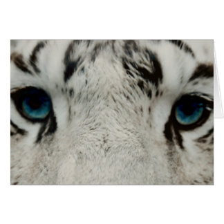 Tigre siberiano blanco tarjeta pequeña