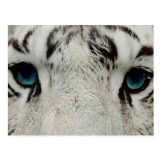 Tigre siberiano blanco tarjetas postales