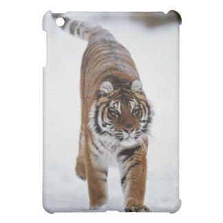 Tigre siberiano en nieve