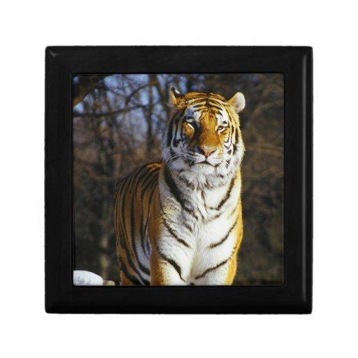 Tigre siberiano joyero cuadrado pequeño