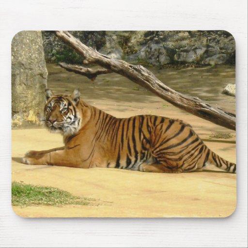 Tigre siberiano Mousepad Tapetes De Raton