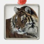 Tigre siberiano (Panthera el Tigris Altaica) Adorno Navideño Cuadrado De Metal
