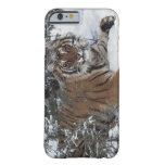Tigre siberiano (Panthera el Tigris Altaica) Funda De iPhone 6 Barely There
