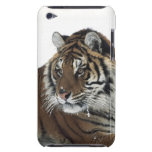 Tigre siberiano (Panthera el Tigris Altaica) iPod Case-Mate Cárcasa