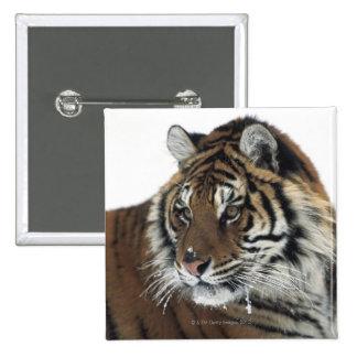 Tigre siberiano (Panthera el Tigris Altaica) Pin Cuadrado
