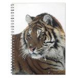 Tigre siberiano (Panthera el Tigris Altaica) Spiral Notebook