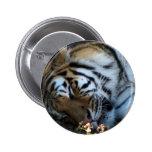 Tigre siberiano pin