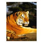 Tigre siberiano por la tarde membretes personalizados