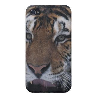 Tigre siberiano que bosteza iPhone 4 protector