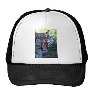 Tigre siberiano que ruge gorra